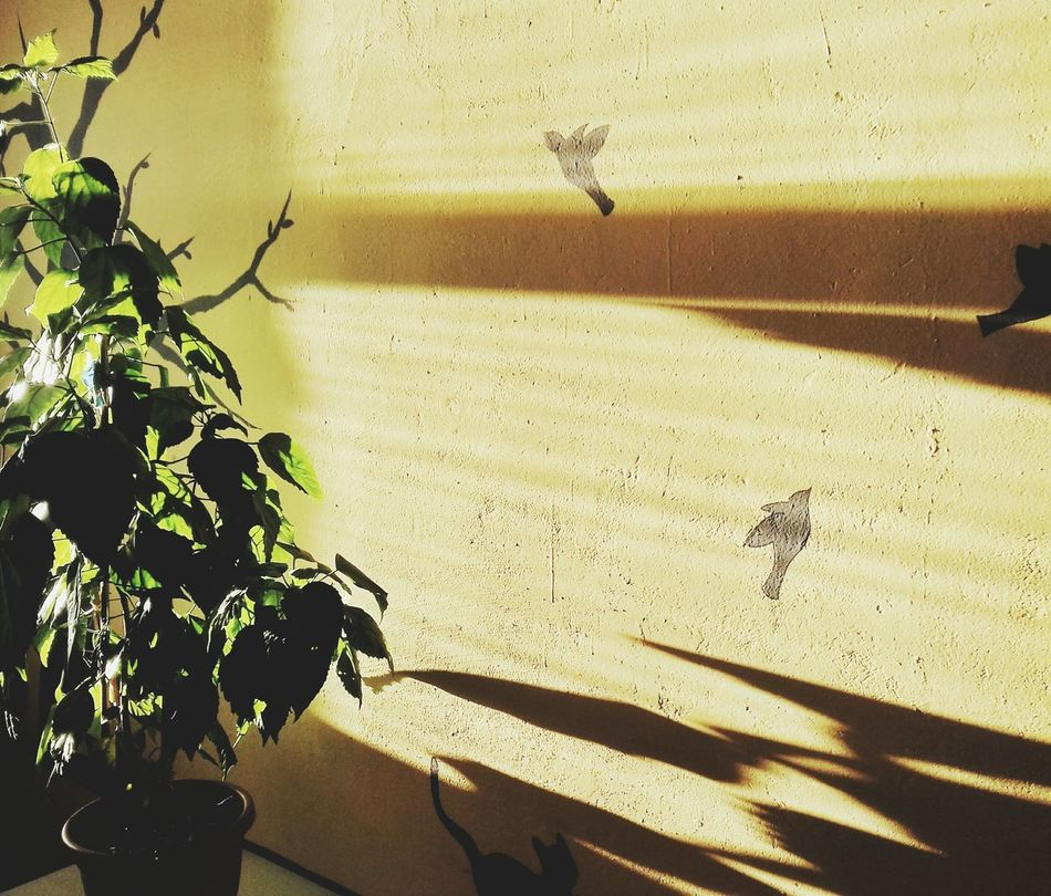 Sunlight Shadow No People Insect Day Outdoors Animal Themes Close-up Nature Sunny Sunny Day Sunnydays Spring Ukraine Kyiv,Ukraine Details Of My Life Nice Atmosphere View Fragility Beauty Moments Shine Plant Birds Interior