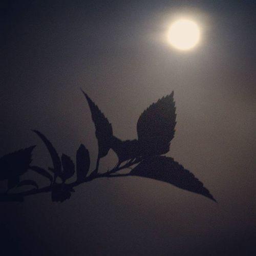 ISO Slowshutter Noisy Fullmoonday Moon Instagood Instapic Instagram Instaphoto Instamood Picoftheday Bestoftheday Shadow Brightness