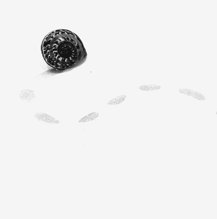 https://youtu.be/PkSp8wc8lKw🐌 Snail Snail Trail Beauty In Nature Simplicity Minimalism Close Up Macro Still Life Abstract Macro Photography First Eyeem Photo Illuminated EyeEm Gallery EyeEm Best Shots Studio Shot Black Background Nature Black And White Light And Shadow Popular Creativity My Unique Style EyeEmBestPics Eyeem Photography Garden