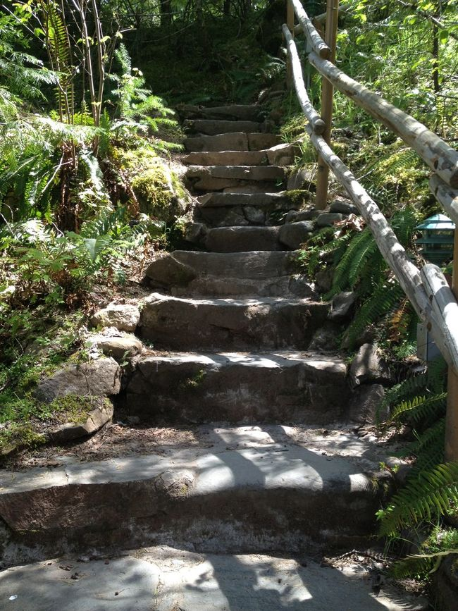 Ferns Filtered Light Lush Foliage Nature Stairs Sunlight Tranquil Scene Tranquility
