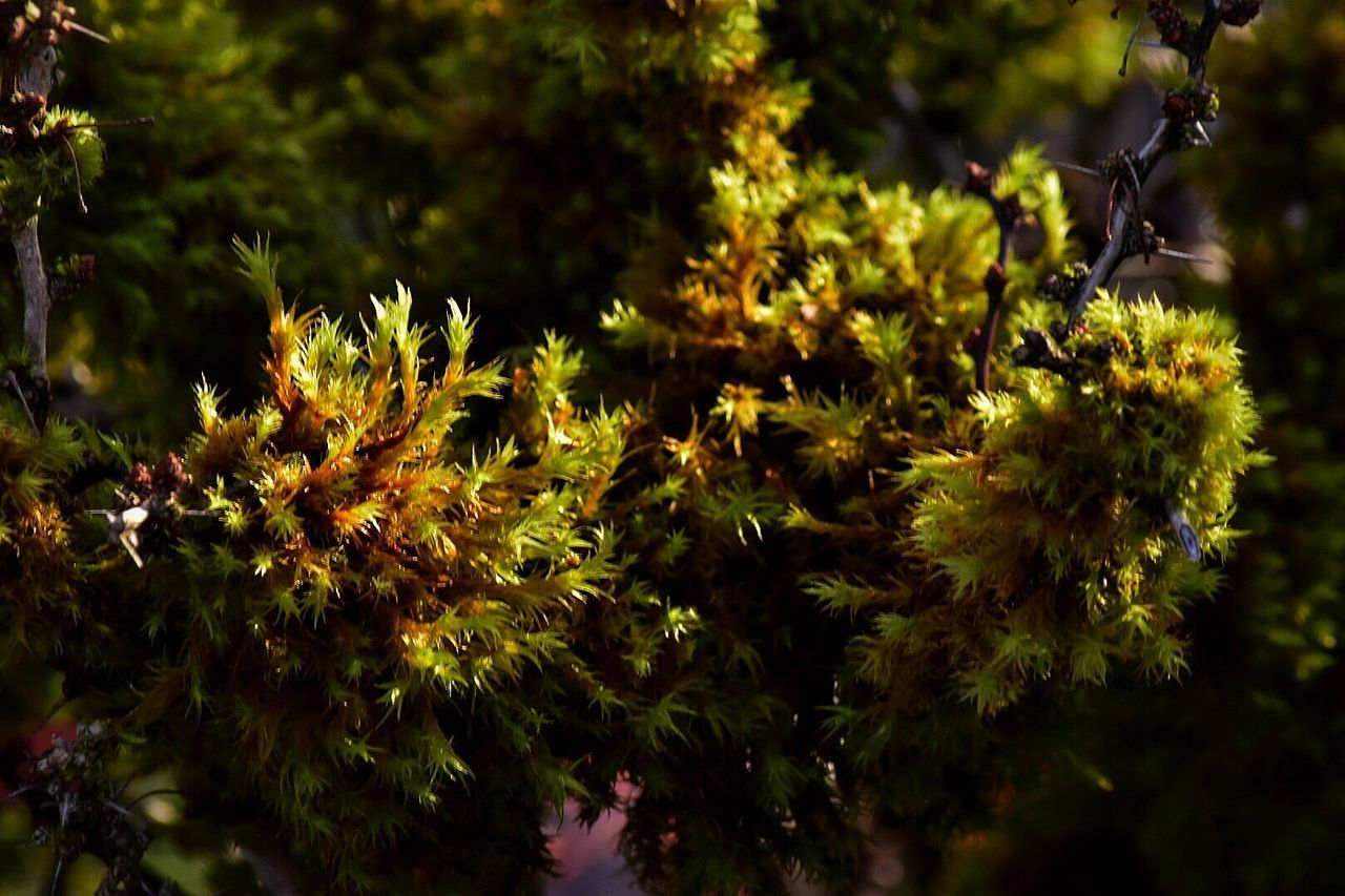 Growth Nature Plant Flower Yellow Beauty In Nature Outdoors No People Close-up Tree Fragility Day Freshness At Work Outdoor Photography Growing Freshness Moss Mossy Green Color Green Wet Moisture