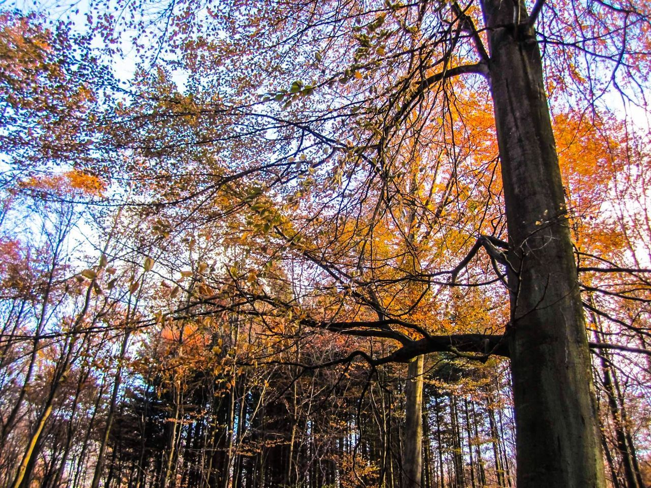 Tree Tree Trunk Low Angle View Forest Nature Branch Growth Beauty In Nature Autumn No People Day Outdoors WoodLand Scenics Tranquil Scene Tranquility Leaf Sky EyeEm Nature Lover EyeEm Best Shots - Nature Nature Photography Nature_collection Denmark Danmark Skodsborg