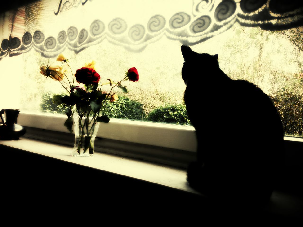 domestic cat, pets, domestic animals, cat, one animal, animal themes, feline, mammal, indoors, silhouette, no people, home interior, flower, sitting, nature, day, close-up