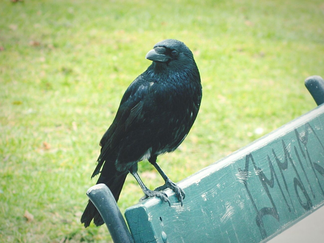 austria Wien 2014 Wien City Hello World Taking Photos A Walk In The Park Openroad Nautral  Monchrome Animal Photography Crows #freetoedit
