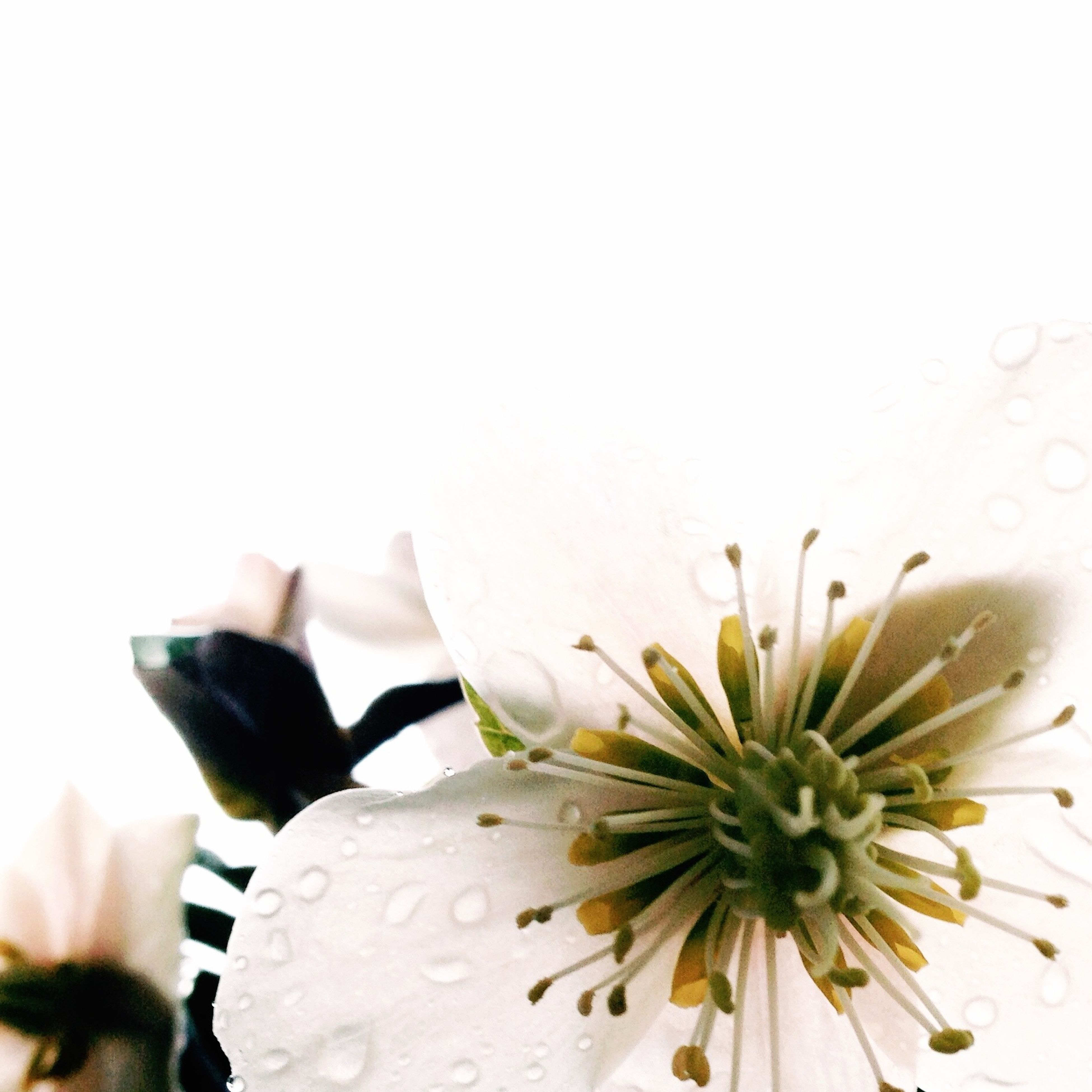 flower, fragility, petal, freshness, flower head, close-up, water, copy space, indoors, plant, beauty in nature, nature, focus on foreground, wet, drop, single flower, glass - material, yellow, day, no people