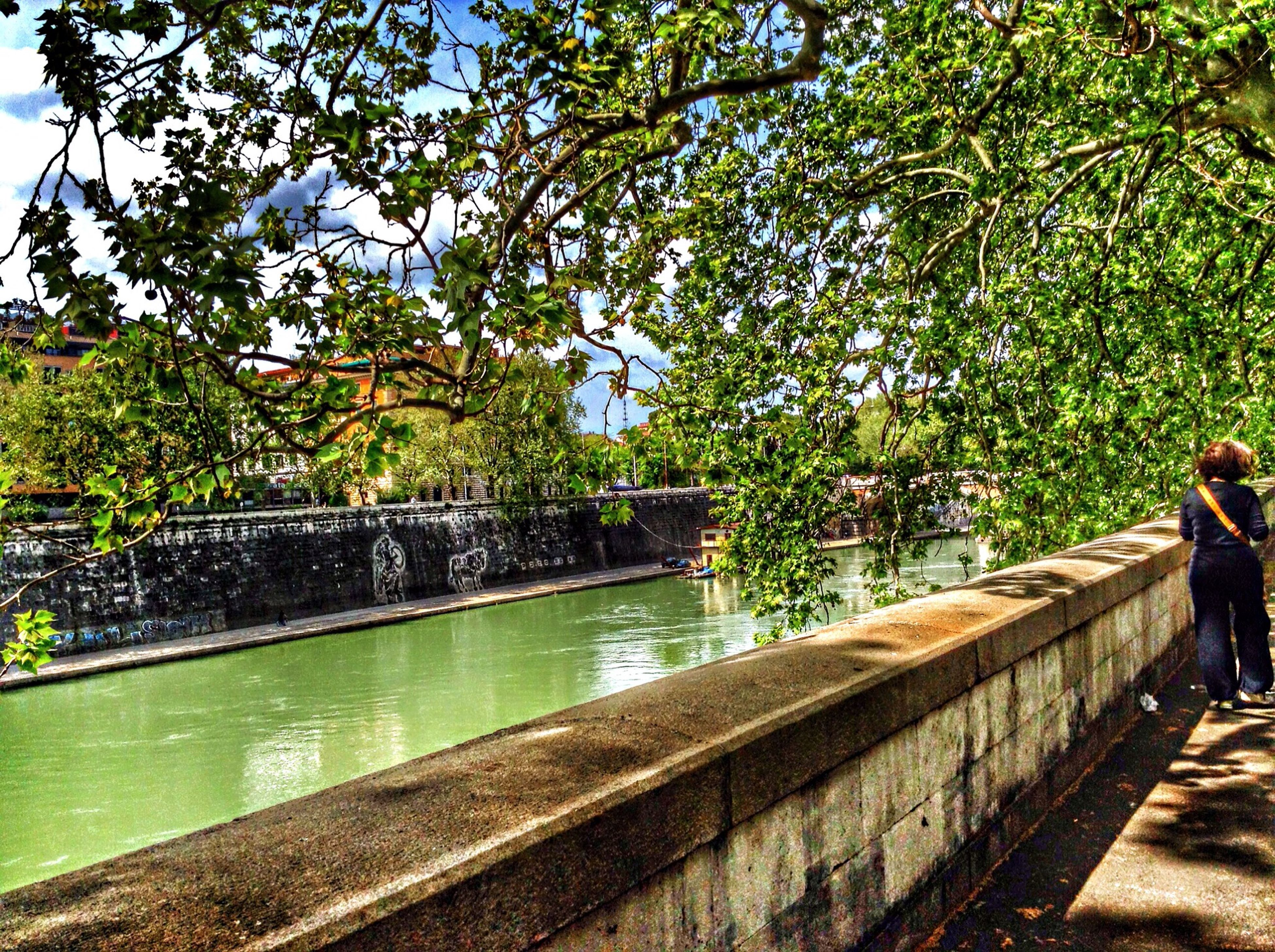 tree, water, railing, built structure, river, bridge - man made structure, architecture, lifestyles, growth, lake, nature, reflection, men, leisure activity, day, sky, canal, park - man made space