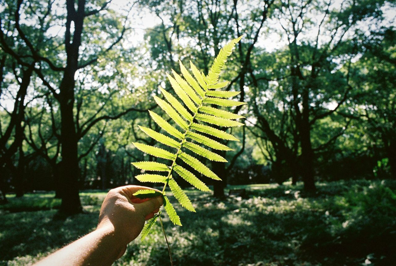 Summer Human Hand Nature Leaves Leaf Tree Beauty In Nature The Week On EyeEem The Week Of Eyeem Beauty In Nature Growth Film Photography EyeEmNewHere EyeEm Selects EyeEm Sunlight Green Color Green Green Green!  Light And Shadow Nature_collection Nature Photography Neon Life