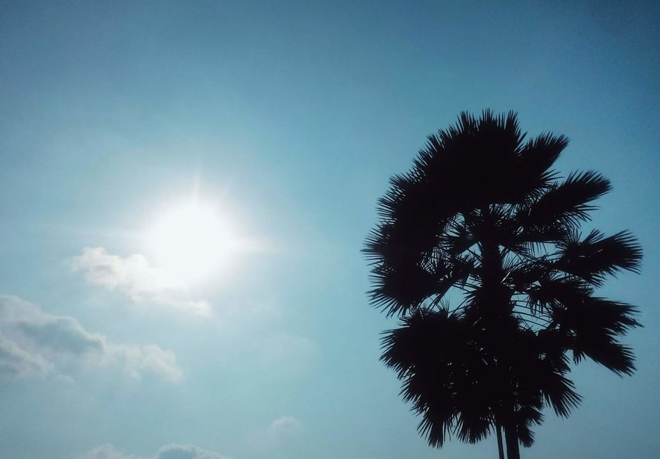 Cielo despejado Cielo Despejado... Despejado Palmera Sol Sky Sunlight Tree Sun Lens Flare Low Angle View Blue Nature Sunbeam Sunny Growth Clear Sky Silhouette Day No People Beauty In Nature Outdoors
