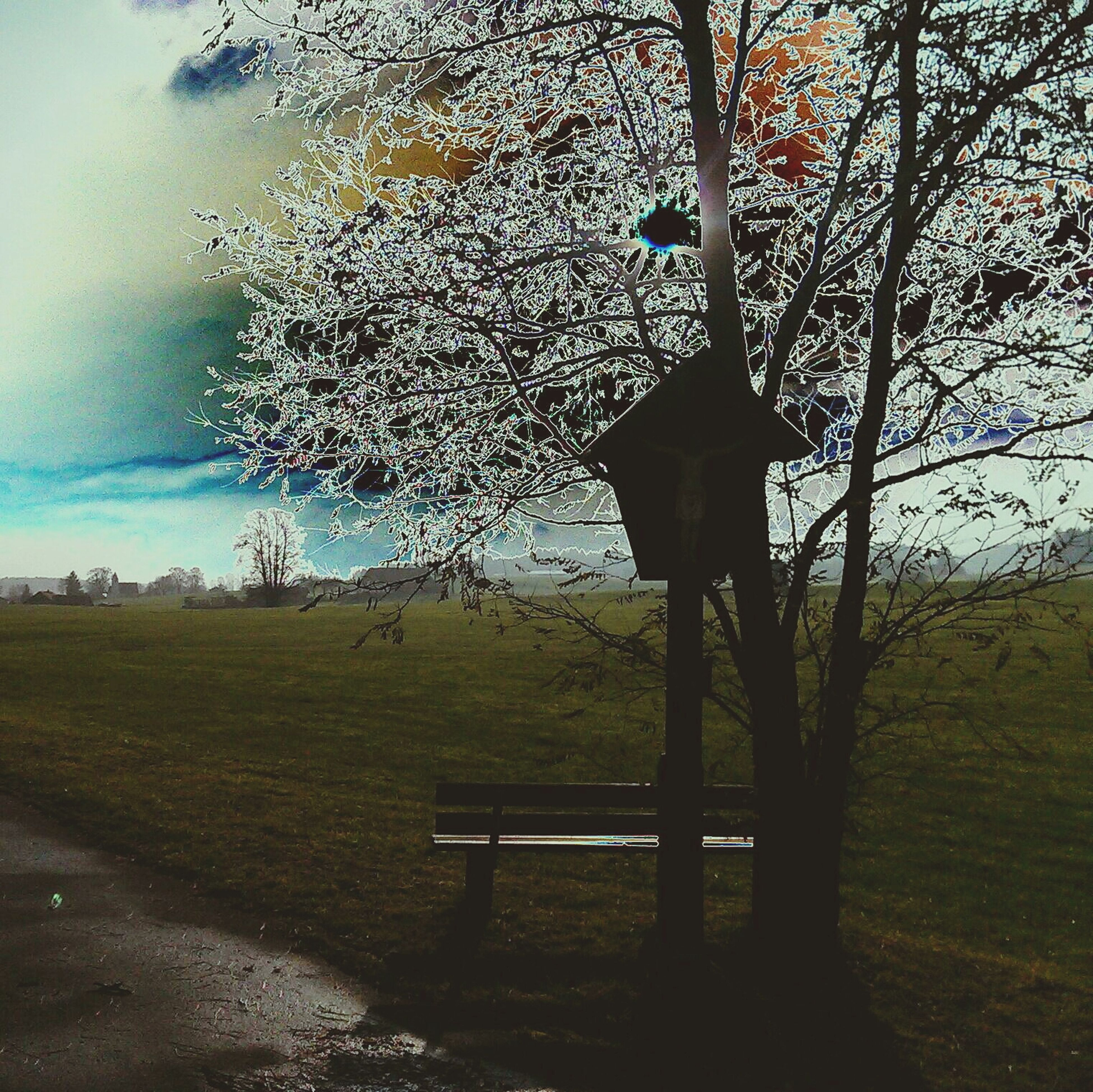 grass, tranquility, tree, tranquil scene, field, landscape, sky, scenics, nature, beauty in nature, bench, grassy, empty, absence, sunlight, tree trunk, non-urban scene, growth, branch, day