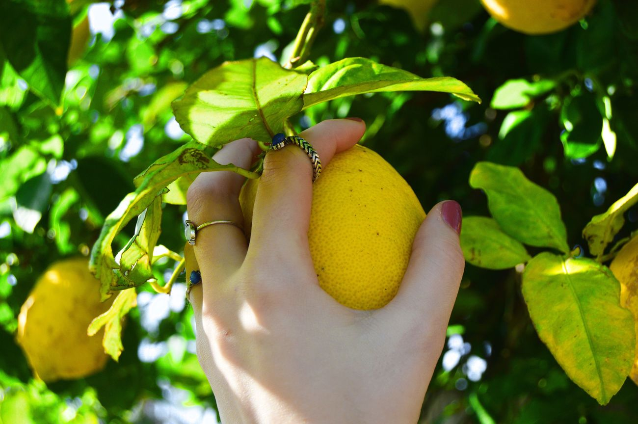 Fruit Freshness Food Healthy Eating Healthy Lifestyle Outdoors Leaf Tree Fruit Tree Focus On Foreground
