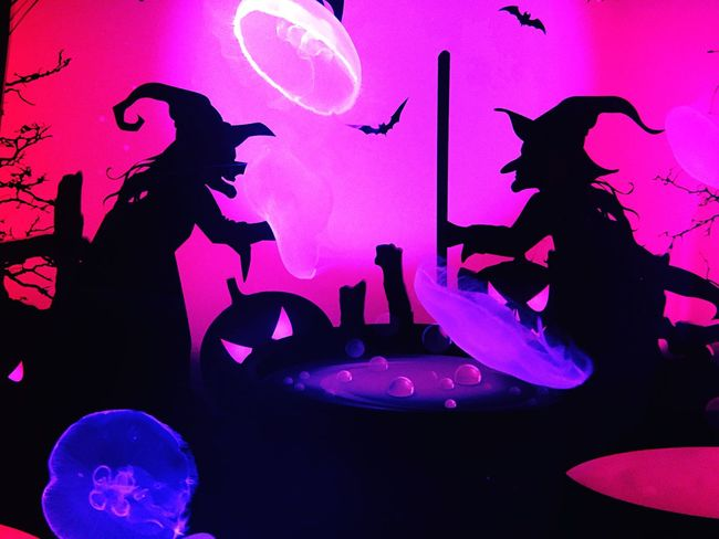 Witches and a cauldron and jellyfish👻🎃 Silhouette Arts Culture And Entertainment Enjoyment Vibrant Color Halloween Witch Witchcraft  Cauldron Silhouette Aquarium Jellyfish Colors