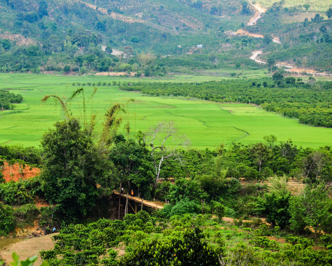 The fram Farm Nikon Road Tree Vietnam Agriculture Bao Loc Beauty In Nature Bridge D7000 Day Field Green Color Growth Landscape Nature No People Outdoors Rural Scene Scenics Sonjewel Sonjewelphotographer Tranquil Scene Tranquility Tree