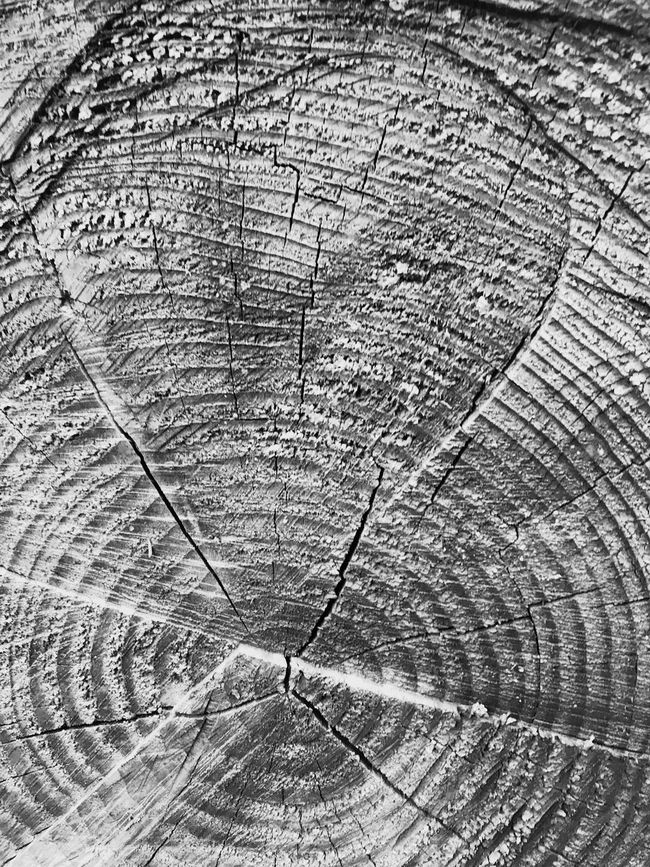 Blackandwhite Textures And Surfaces Tree Ring Backgrounds Full Frame Wood - Material No People Outdoors Age Of A Tree Trunk Detail Tree Trunk Woodland Scene Devon Cracks