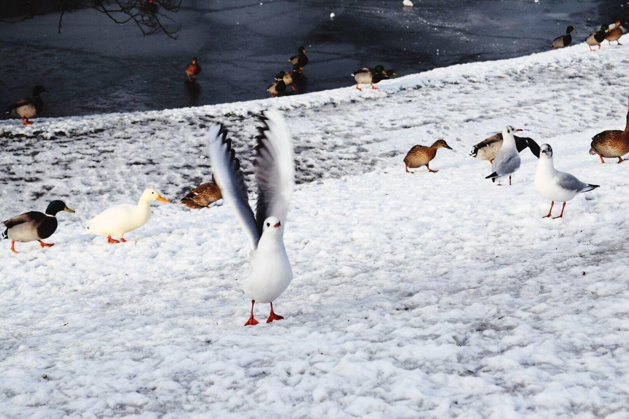 Birds On Snowy Landscape During Winter