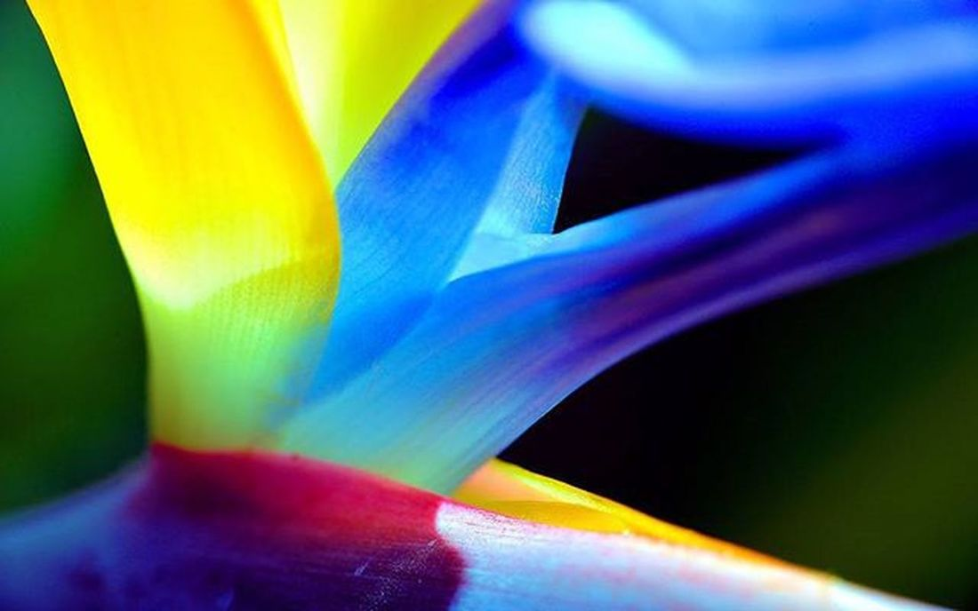 "The center of ""Birds of Paradise"" Paradisebird flower. When I saw the whole flower, I looked around and kept thinking what kind of picture would be good for this thing. I have pictures with different angles, but lets start with this =) I love the color combination of it 2) 9vaga_flowersart9 3) Tv_depthoffield 4) Tv_flowers 5) Fotofanatics_flowers_ 6) Flowersandmacro 7) Splendid_dof 8) Macro_vision 9) Tgif_macro 0) Quintaflower 1) Resourcemag 2) Macro_club 3) Macroworld_tr 4) Splendid_flowers 5) Ig_shotz 6) Jj_indetail 7) Best_photogram 8) IGSCFLOWERS 9) 1001macro 0) Bns_macro 1) Best_macro 2) Flair_macro 3) Ig_macro 4) Macro_mood 5) Macro_holic 6) macro_sultans 7) my_daily_macro 8) macro_secrets 9) colors_ofourlives 0) pocket_dof"