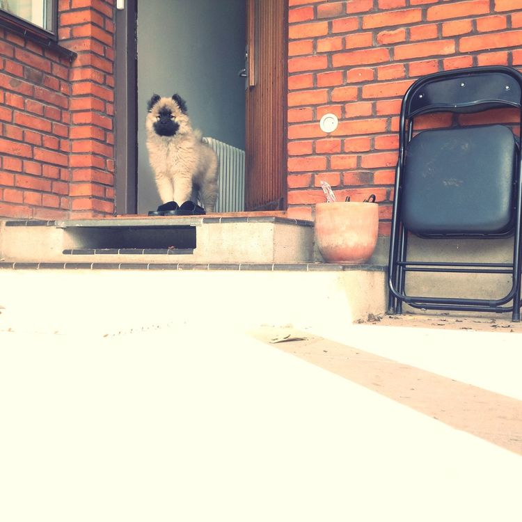 I Love My Dog❤ I Love My Dog Qeen Princess Eurasier
