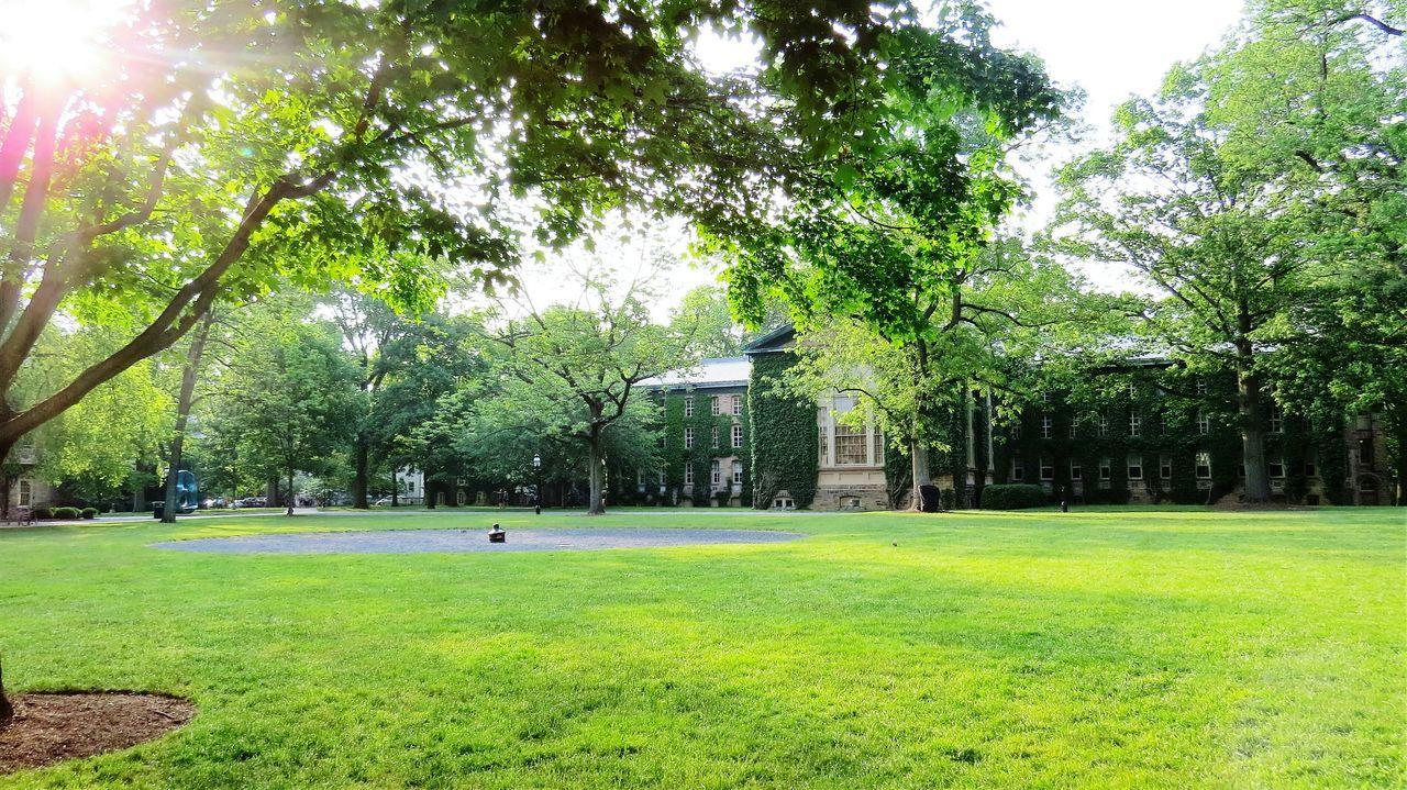 Sun is shining Princeton University Architecture_collection Garden Photography Green Green Green!  Greenary Sunrays Sunlight Trees Leaves Shadow