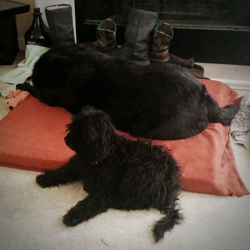 dogs Puppy Love dog kids Sharpe Kentucky