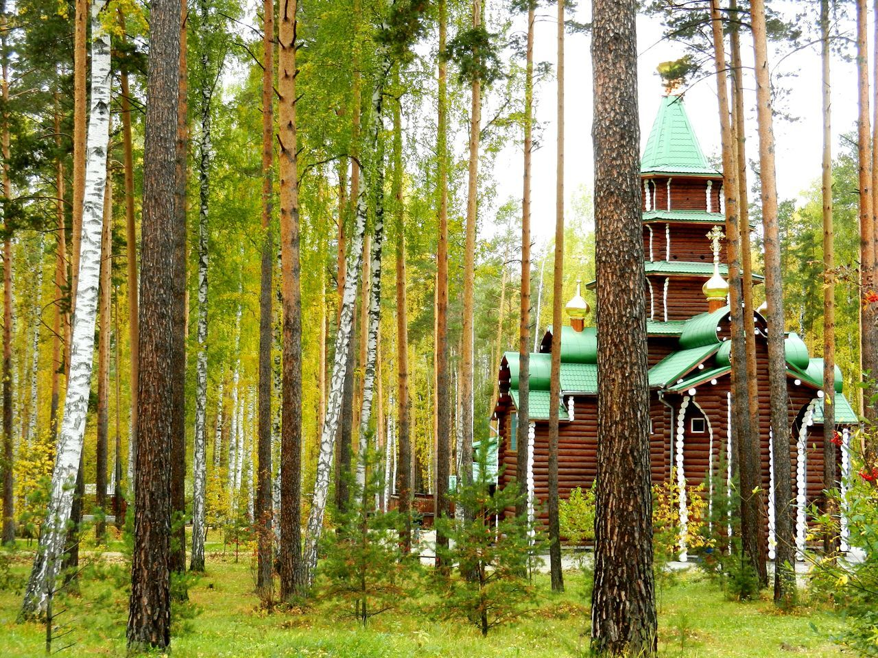 Tree Tree Trunk Growth WoodLand Branch Nature Tranquility Tranquil Scene Outdoors Day Scenics Beauty In Nature Green Color No People Tall Russian Nature Traveling y Yekaterinburg Monastery Linden Tree Religion God Spirituality Wooden Architecture