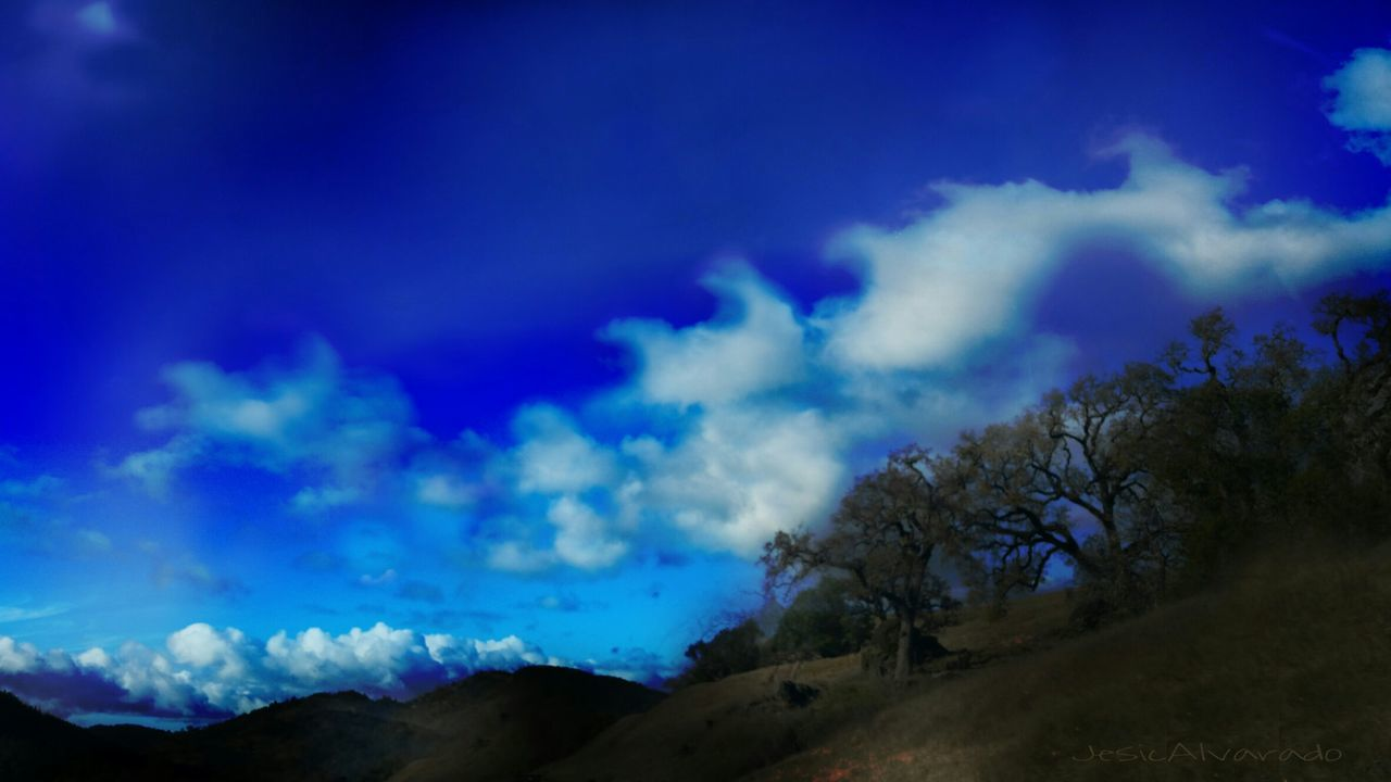 Sky Blue Beauty In Nature Tranquility Nature Landscape Cloud - Sky Winter Outdoors No People Northern California Nature Live, Love, Laugh Mendocino County Scenics Tree