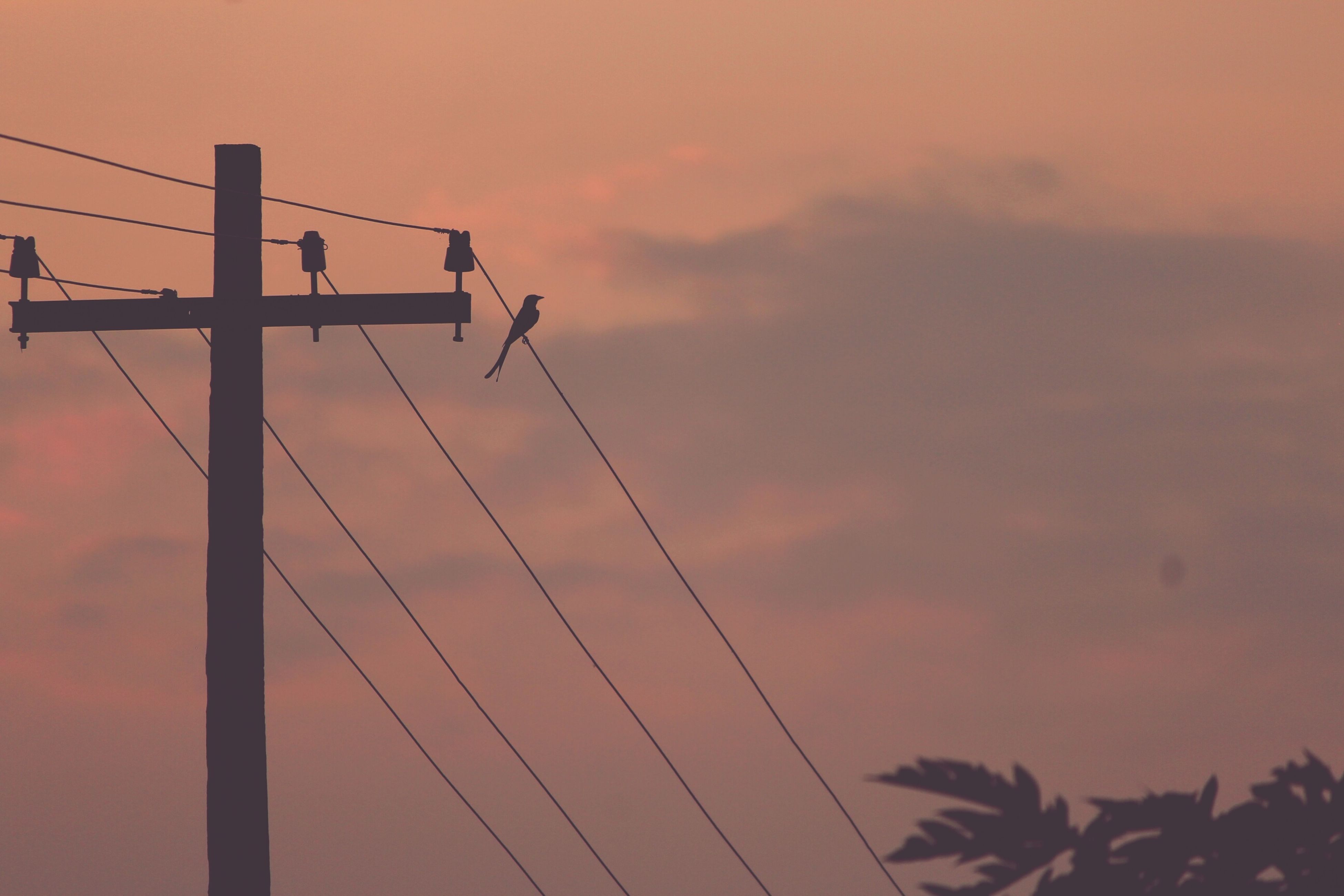 sunset, low angle view, power line, silhouette, sky, electricity pylon, connection, orange color, power supply, electricity, cable, fuel and power generation, nature, beauty in nature, tranquility, cloud - sky, technology, outdoors, scenics, dusk