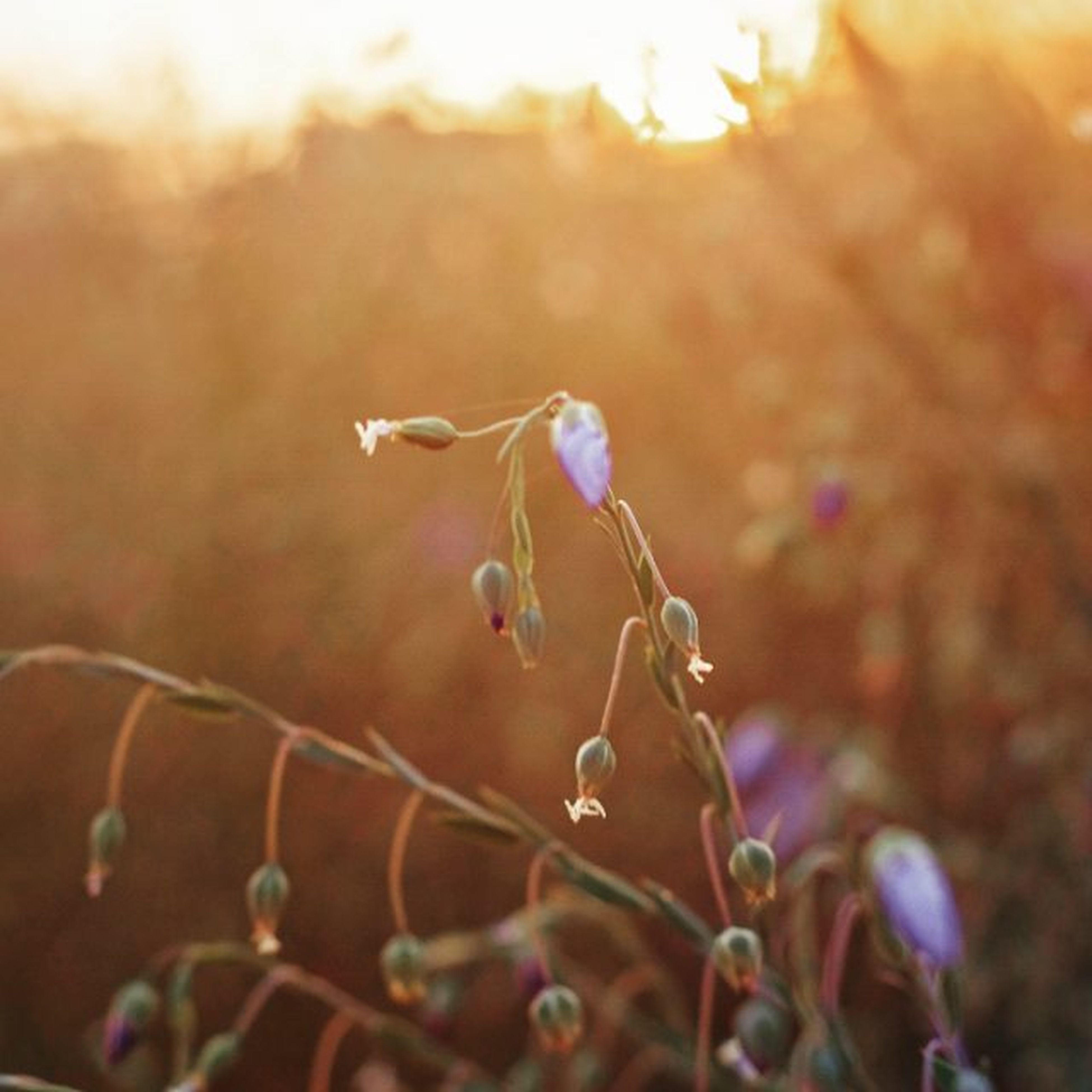 focus on foreground, close-up, selective focus, plant, growth, nature, stem, fragility, beauty in nature, twig, sunlight, lens flare, outdoors, bud, tranquility, day, no people, leaf, flower, freshness
