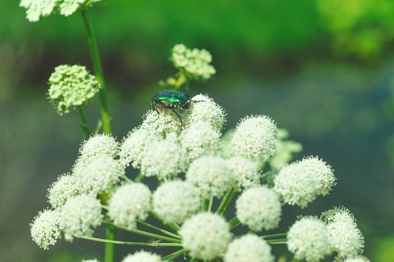 Architecture Russia Suzdal Suzdal Kremlin Travel Traveling Animals In The Wild Architectural Detail Flower Green Color Growth History Insect Nature No People One Animal Plant Summer