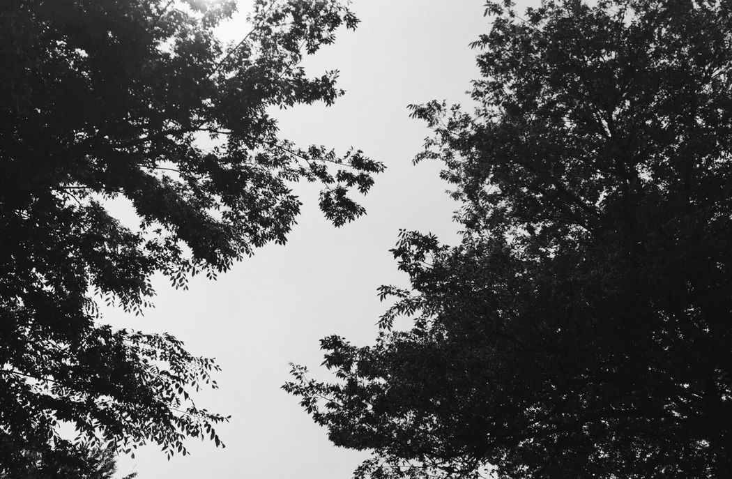 Tree B la ck And White S K Y Hello World Relaxing Taking Photos Enjoying Life Hanging Out Check This Out