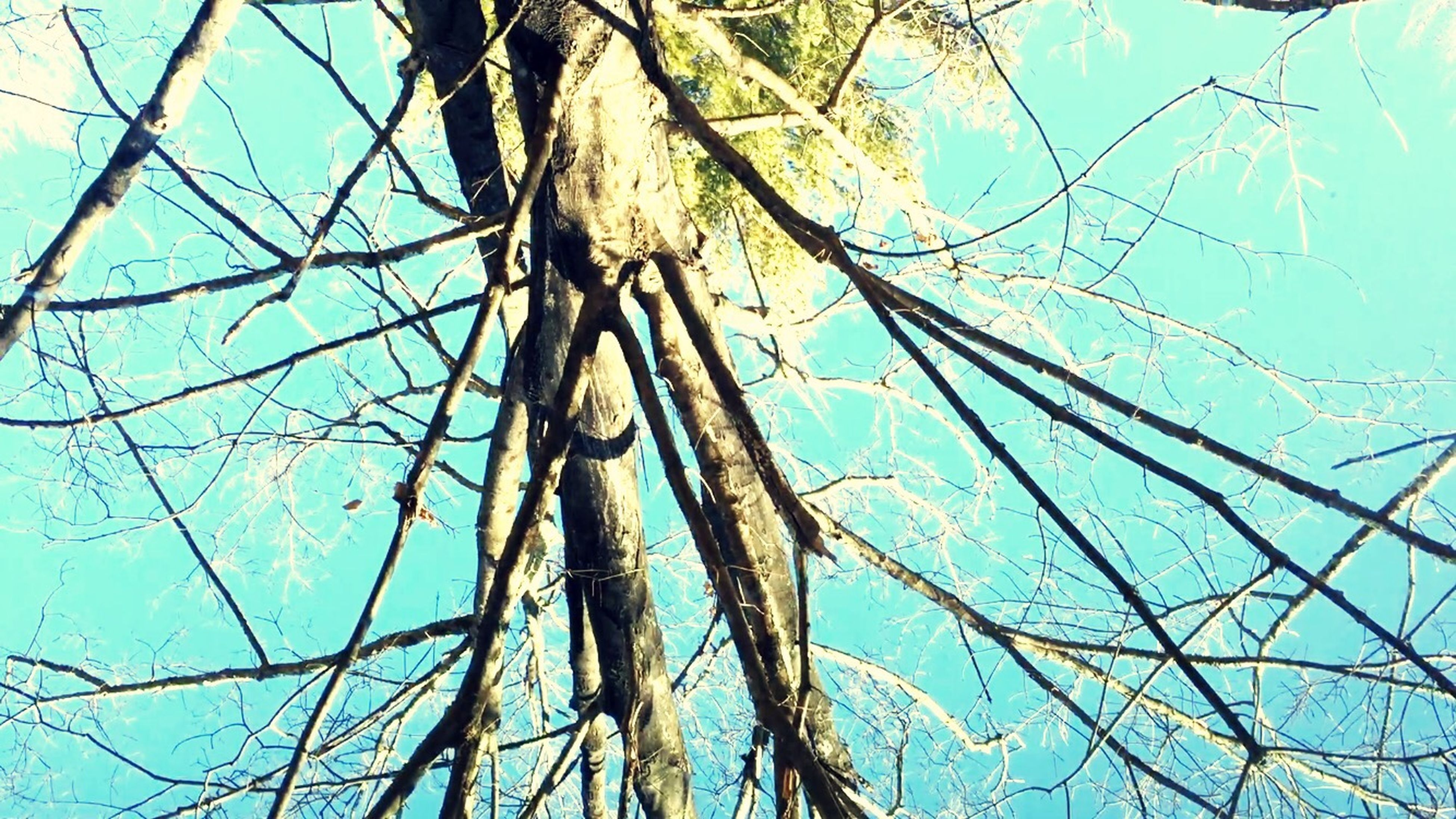 low angle view, blue, branch, tree, sky, clear sky, bare tree, nature, day, part of, outdoors, tree trunk, no people, directly below, complexity, tranquility, beauty in nature, backgrounds, sunlight, growth