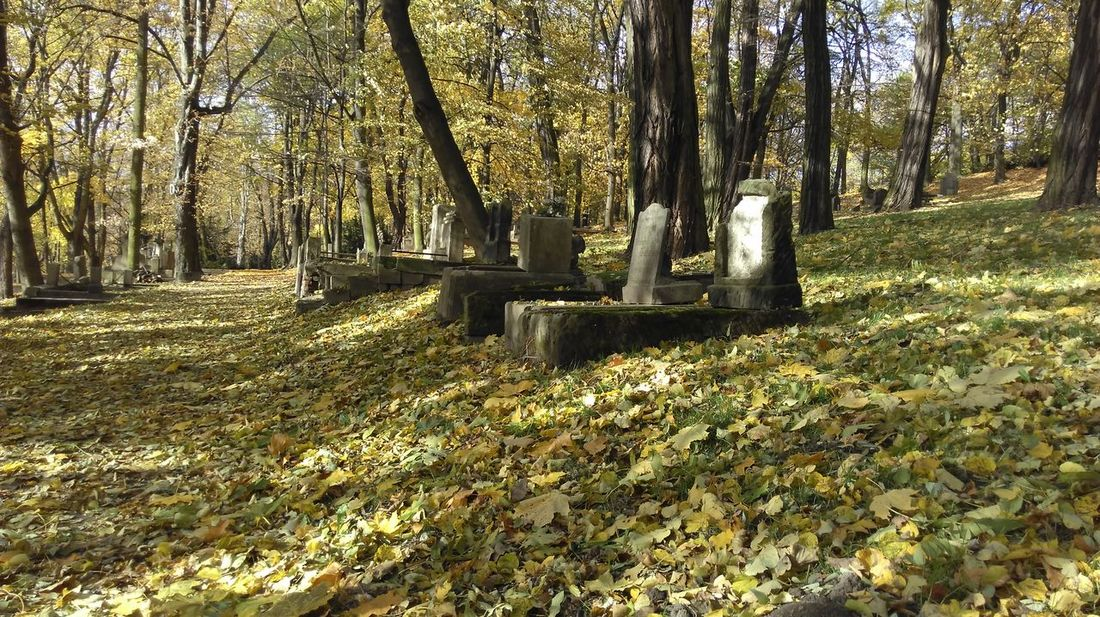 Old Cementery Graveyard Graves Scenics Autumn Of Life