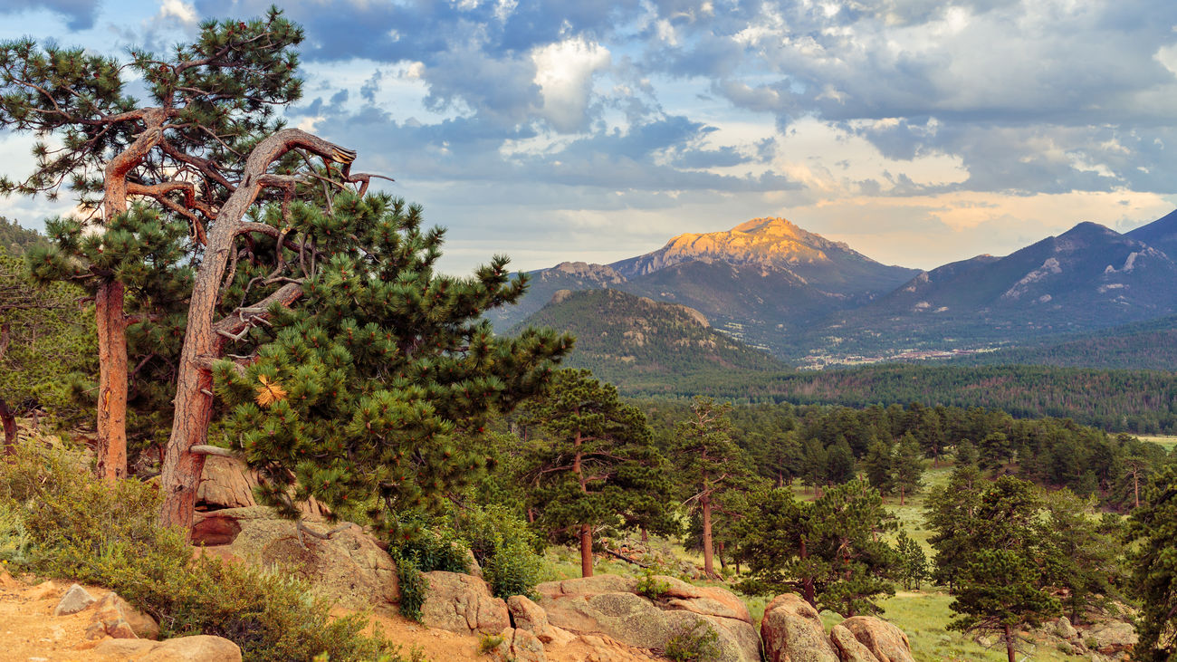 Beautiful stock photos of licht, Beauty In Nature, Day, Estes Park, Growth
