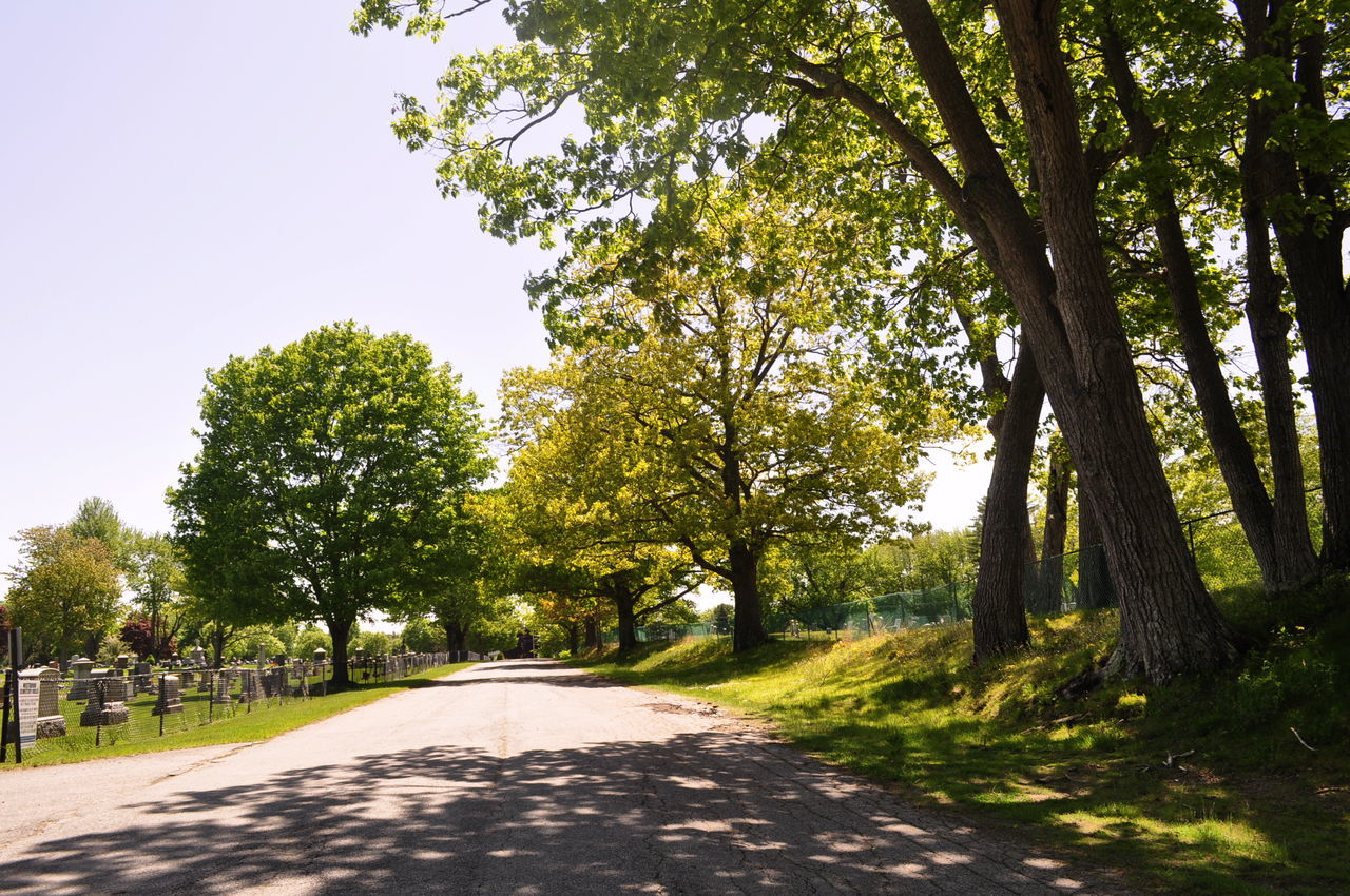 tree, road, the way forward, nature, growth, outdoors, day, sunlight, no people, branch, scenics, clear sky, beauty in nature, sky