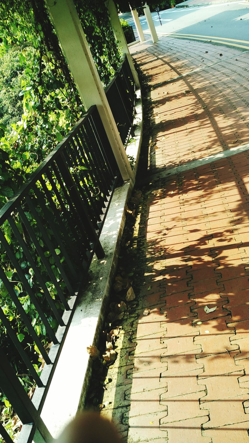 Track MOUNTFABER Shodows Roads Green Plant Black And White