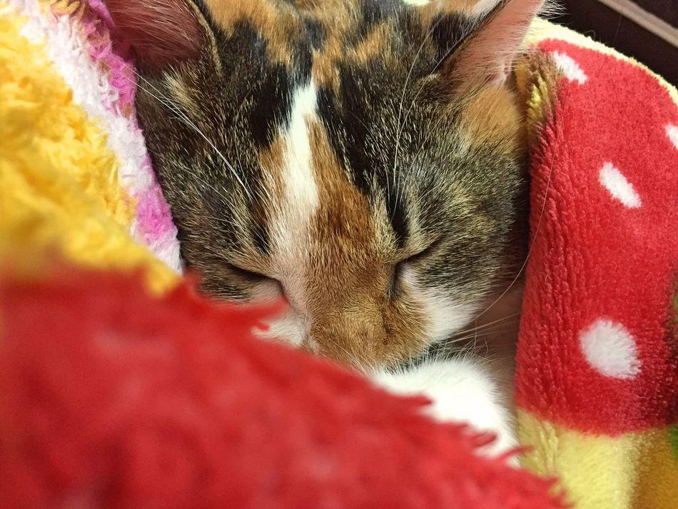 Sweet dream😽💤 My Cat ウチの姫様 Cat Lovers Cat♡ Relaxing EyeEm Animal Lover Goodnight Goodnight ♡