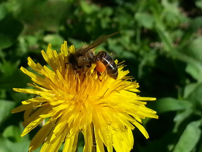 Wildflowers Yellow Flowers Beauty Of Nature Humble-bee Flower CollectionBeautiful ♥ South Africa