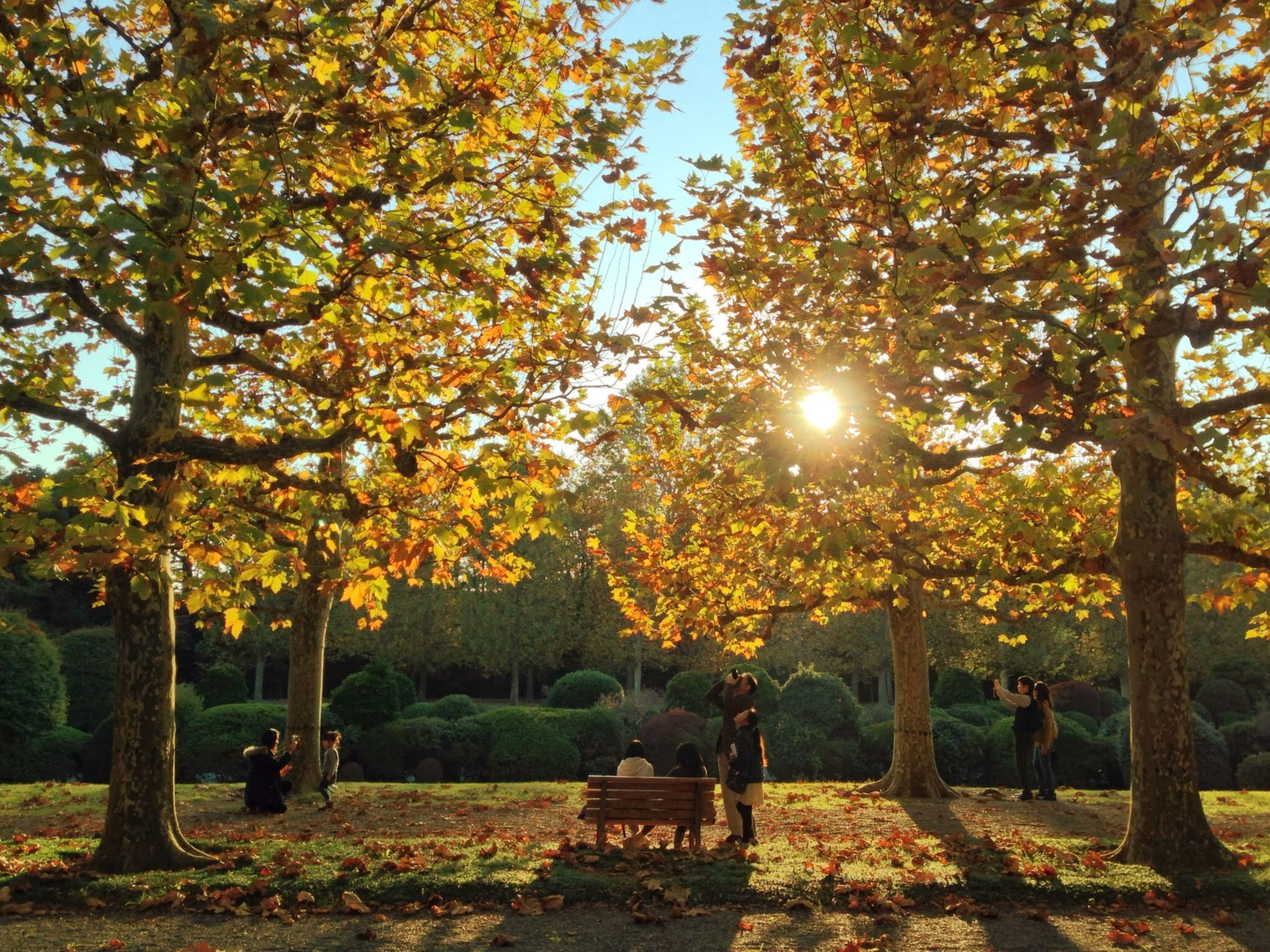 tree, autumn, growth, park - man made space, beauty in nature, nature, tranquility, sunlight, season, branch, change, orange color, scenics, tranquil scene, park, bench, yellow, sunset, outdoors, sun