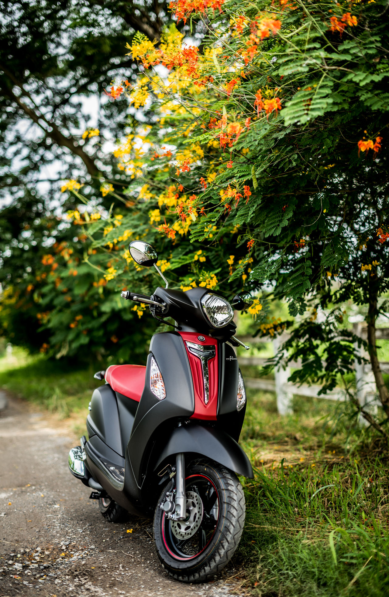 Autumn Beauty In Nature Blooming Blossom Day Flower Forest Grand Filano Motorcycle Nature No People Outdoors Parking Scooter Tree Yamaha