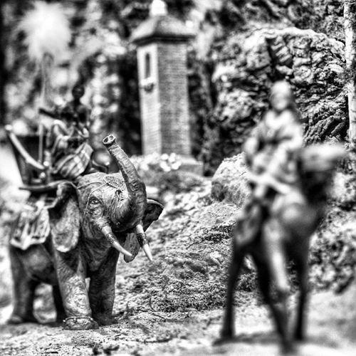 Un rey en un elefante...