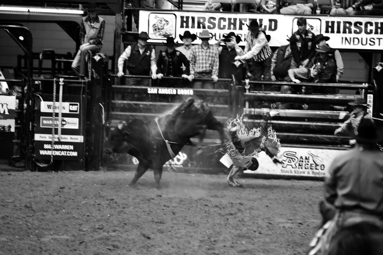 Livestock Black And White Collection! Rodeotime This Week On Eyeem Texas Photographer Rodeo Black & White Photography San Angelo Texas EyeEm Gallery Eyeemphotography Bull Riding/rodeo Black And White Collection