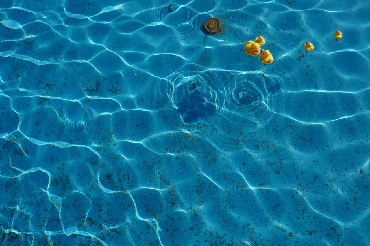 Artificial Ducks Floating On Sea