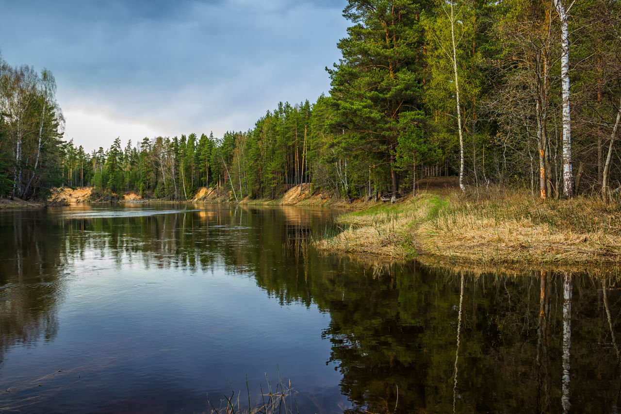 Spring. Reflection of trees in water of the river Mologa. Beauty Beauty In Nature Day Forest Lake Landscape Mologa Natural Parkland Nature No People Outdoors Reflection Reflection River Sky Tree Vacations Water