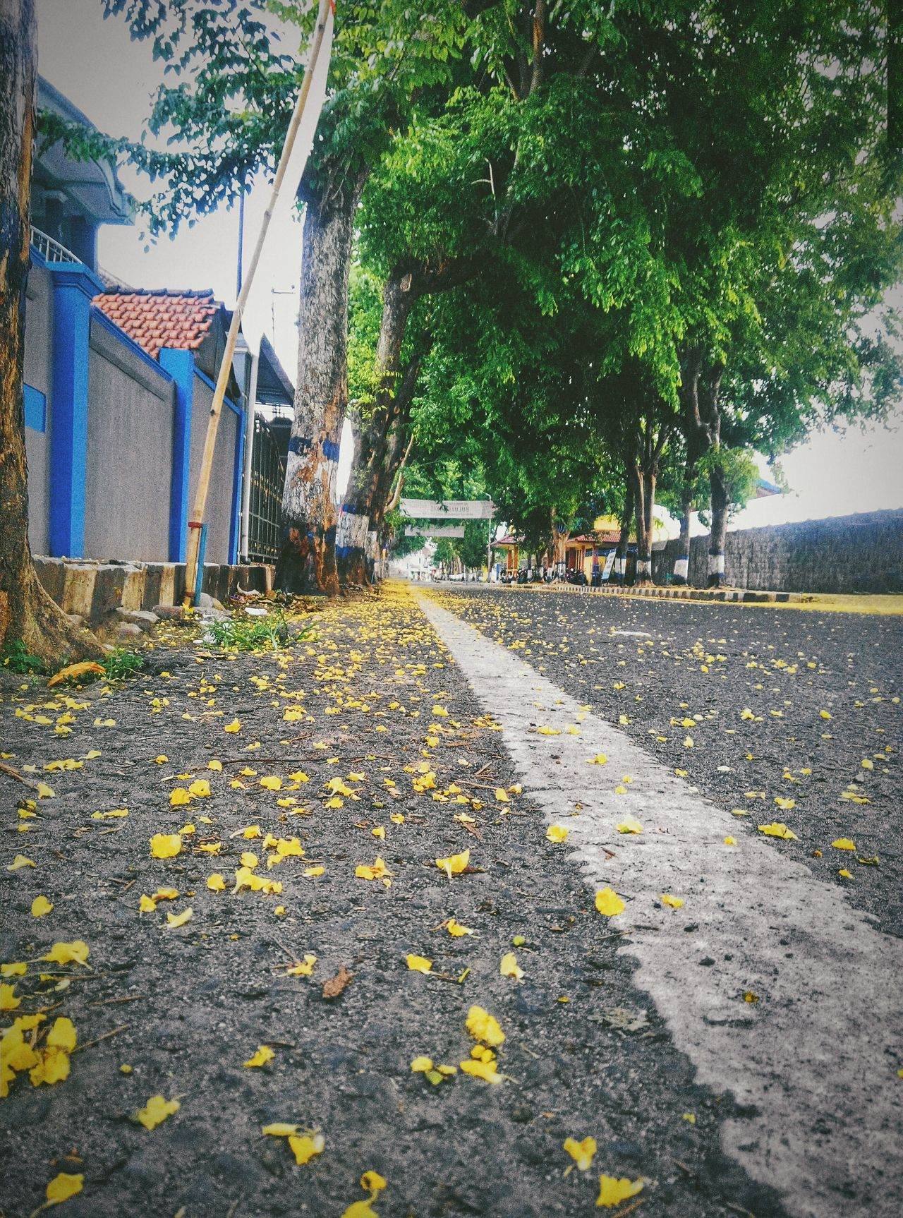 kick up on the roots Tree Street Auntumn Walk Happinessvibes