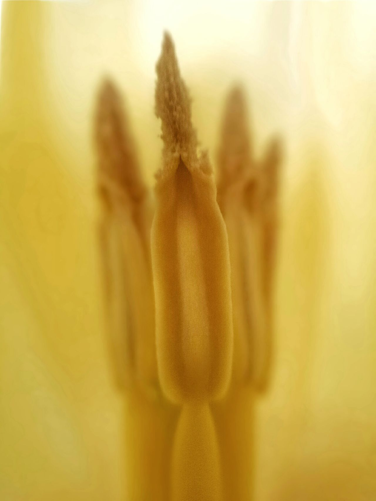 Phone Photography With Clip-on Macro Lens Phone Macro Samsung Galaxy S4 Phone Yelow On Yellow Yellow Flower Yellow Tulip Phone Samsung Close-up Of A Yellow Tulip Macro Of A Yellow Tulip PhonePhotography Flower Collection Macro_perfection Nature_collection Phone Photography Flower Naturelovers Flowerporn Nature Lover Macro Photography Nature_ Collection  Macro Beauty Naturelover 50shades Of Yellow Yellow Samsung Galaxy S4 Macroclique