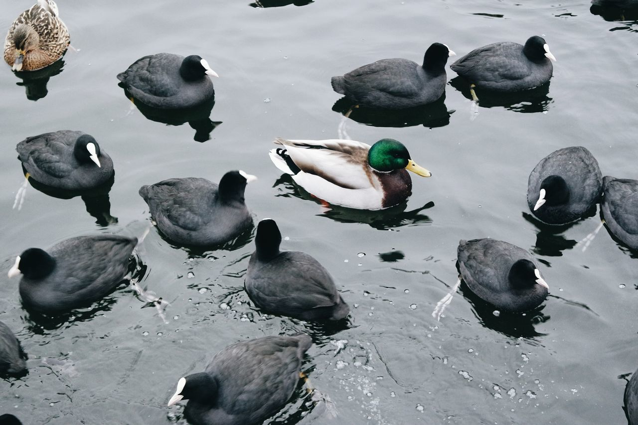Large Group Of Animals Sea Water Nature Close-up Outdoors Day No People Ducks Duck