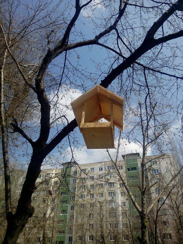 Tree Sky Low Angle View No People Nature Outdoors Birdhouse Day Spring Birds The House For Birds Leaf Nesting Box Brown ствол Tree дерево Природа красота Коричневый Beauty Rostov-on-Don Architecture Life