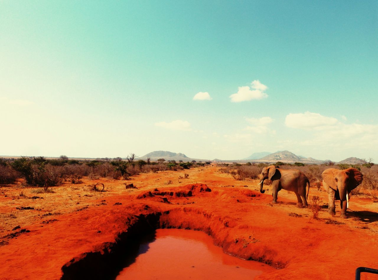 Beautiful stock photos of elephant, Animal Themes, Animals In The Wild, Barren, Cloud - Sky
