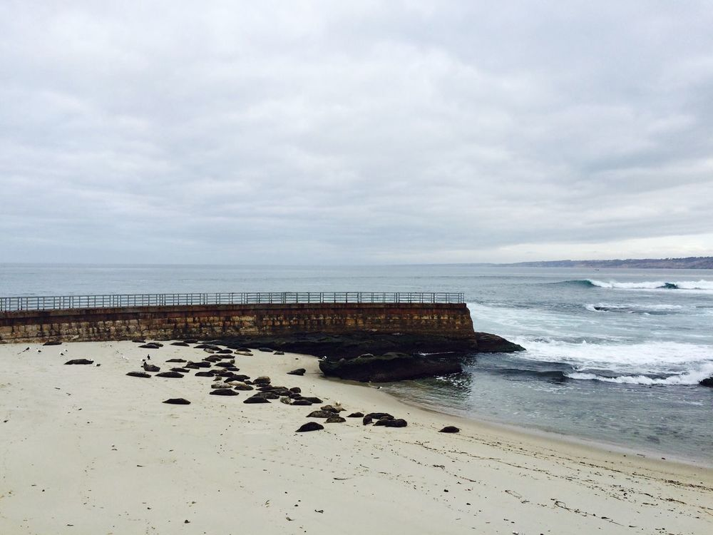 Lajollabeach Sealion  Check This Out Taking Photos