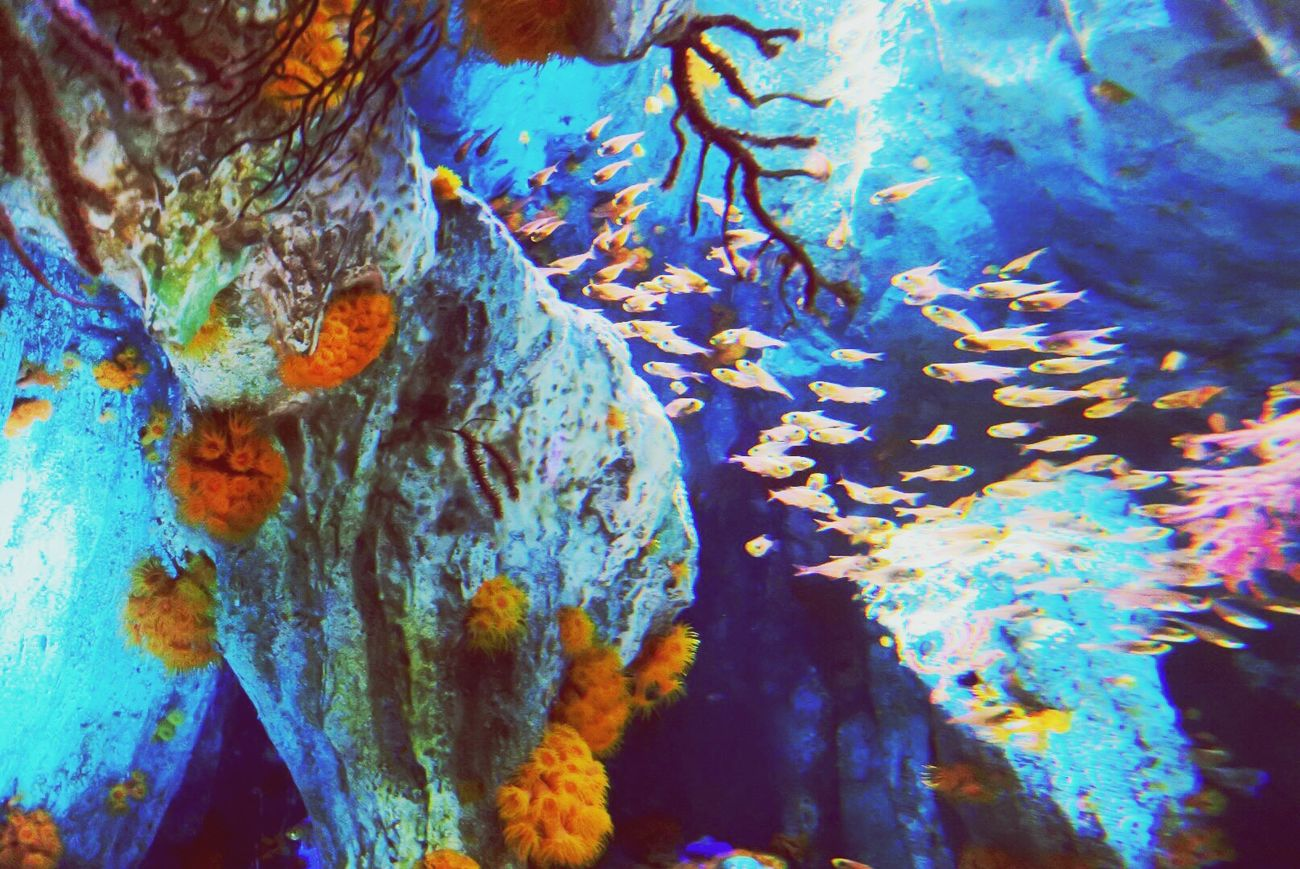 Backgrounds Full Frame Close-up Blue Abstract Water Textured  Underwater Beauty In Nature No People Multi Colored Nature Paint Sea Life Day Outdoors UnderSea Animal Themes