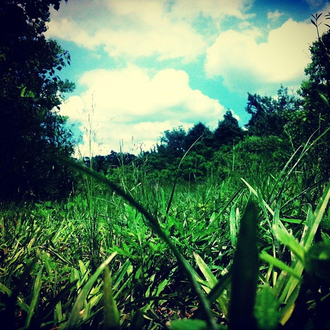 My backyard ⛅✌ Nature Beautiful AtPeace Tranquility Meditation
