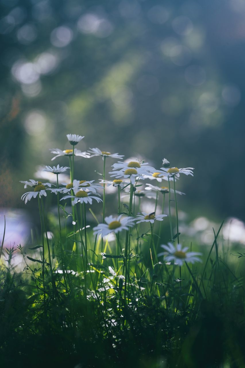flower, no people, nature, growth, plant, beauty in nature, green color, fragility, day, freshness, grass, outdoors, close-up, animal themes, flower head